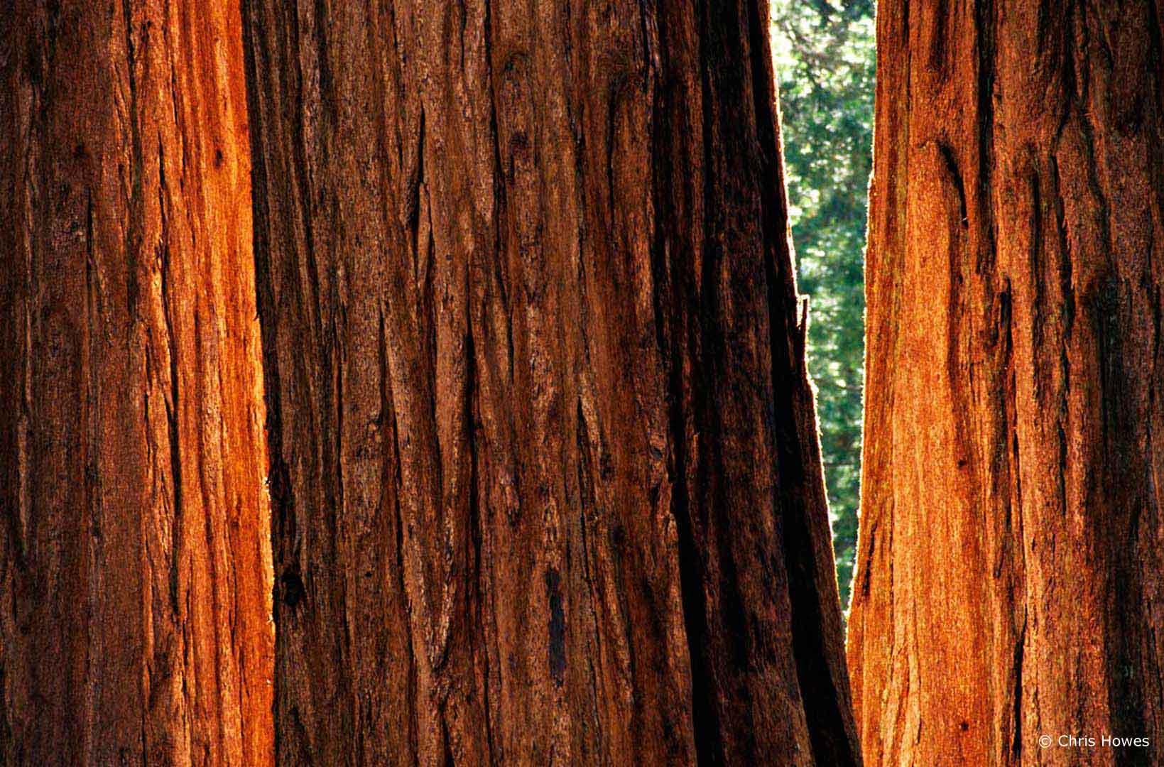 AD0231_Sequoia