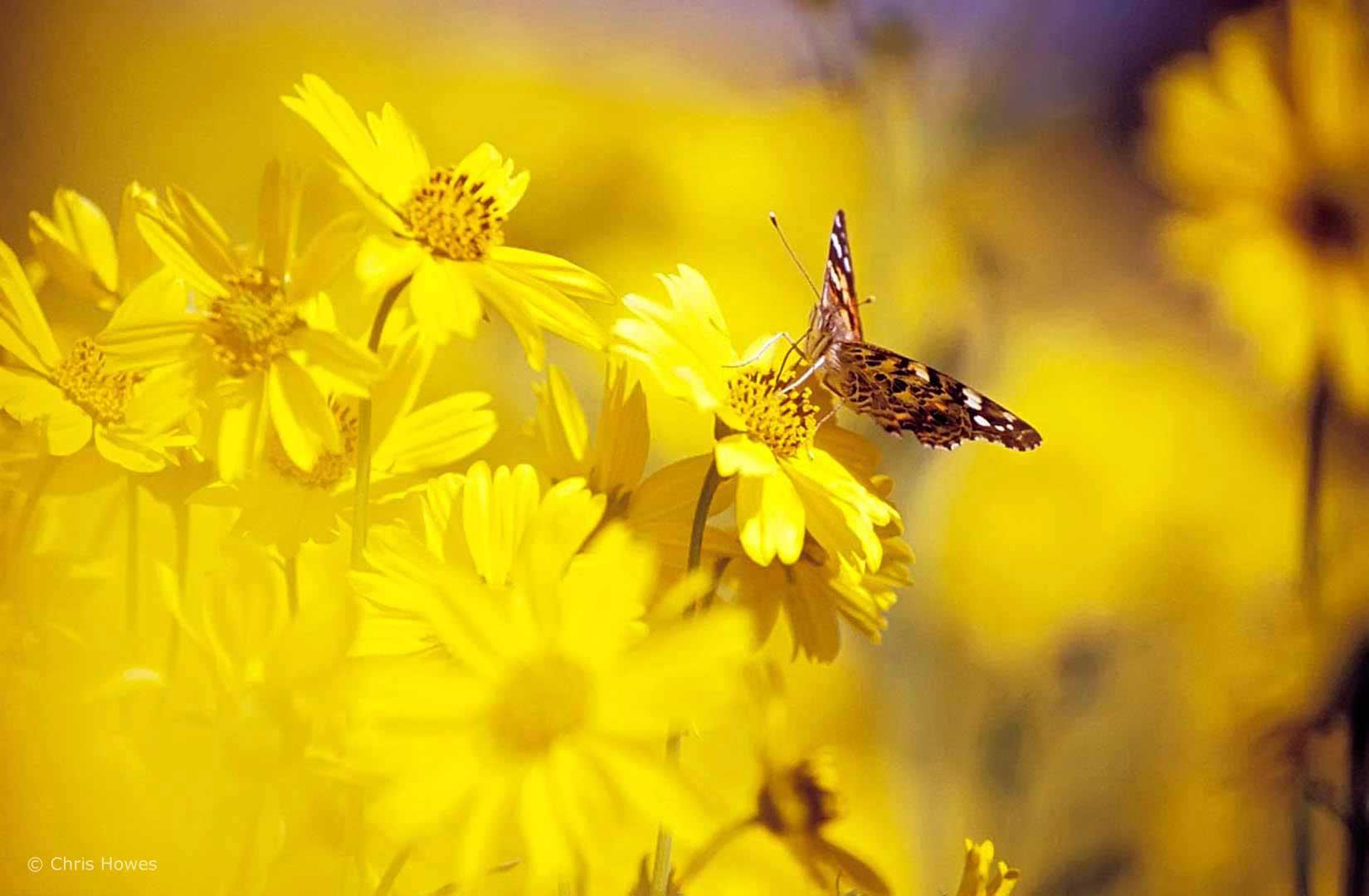 M0141_Butterfly