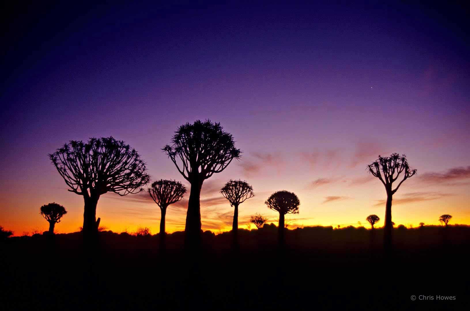 Kokerboom trees, Namibia