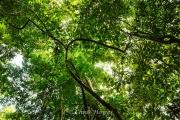 AQ01500d_GreenCave