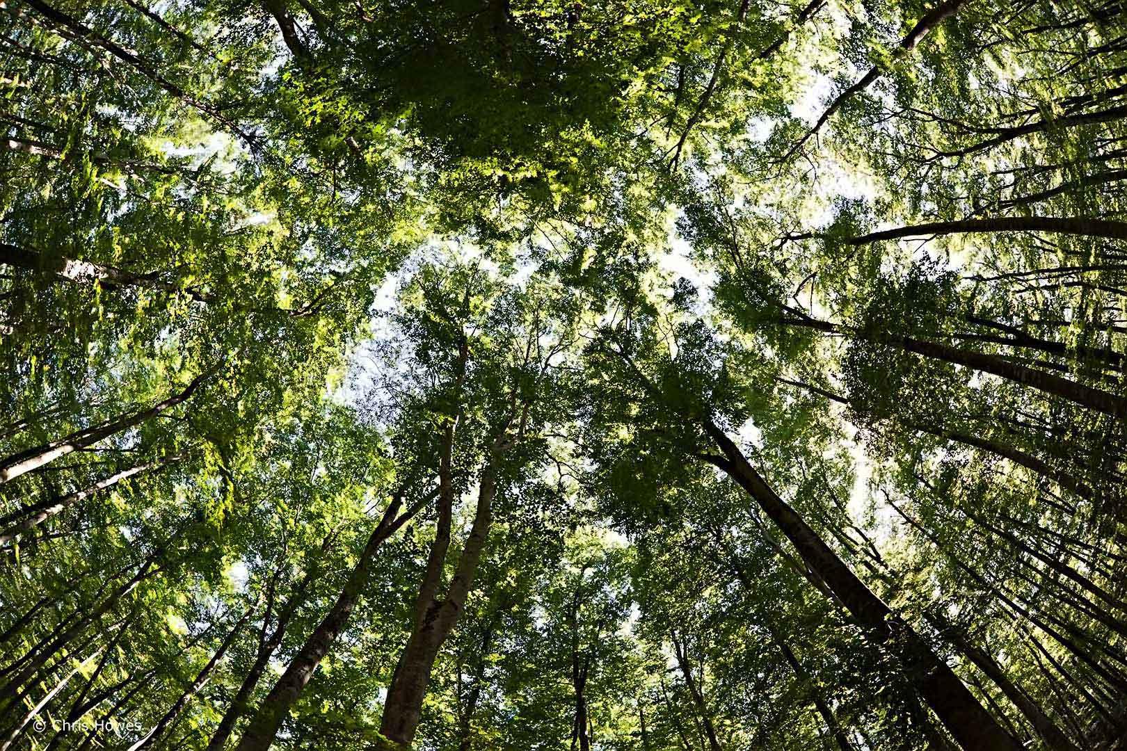 Beech forest, Catalunya, Spain
