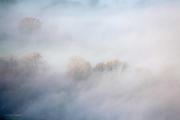 Mist and woodland