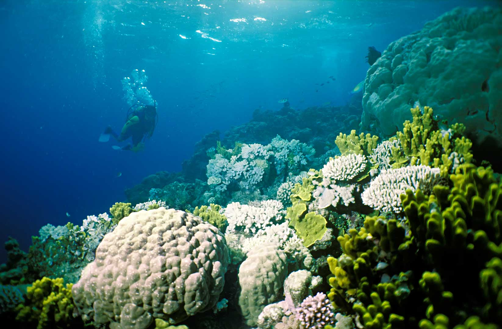 Diving, Great Barrier Reef, Australia